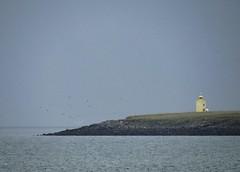 close to the light (grow-till-tall) Tags: ocean summer lighthouse mist film nature birds yellow coast iceland grain calm reykjavik melancholy backhome sland