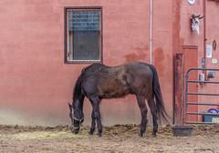 DSC02069 (johnjmurphyiii) Tags: horses usa connecticut cromwell originaljpeg johnjmurphyiii 06416 sonycybershotdsch90 riversedgestables