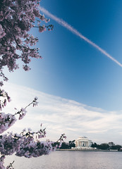 spectacles of spring (almostsummersky) Tags: morning sky flower tree water clouds sunrise cherry washingtondc us dc washington spring districtofcolumbia unitedstates blossom branches bloom flowering cherryblossoms jeffersonmemorial blooming tidalbasin cherryblossomfestival
