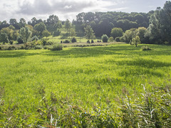 Overbroek Meadow