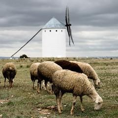 Schaapjes (Bram Meijer) Tags: windmill spain sheep spanje lamancha donquijote schapen molens windmolens campodecriptana