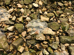 IMG_8916 (craigharrisnelson) Tags: park water turkey bay jellyfish izmit kocaeli seka