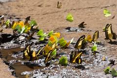 Argentinien_Insekten-72 (fotolulu2012) Tags: tierfoto