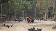 Elephant Taxi (picturesfrommars) Tags: elephant cambodia kambodscha siem reap angkor wat a6000 selp1650