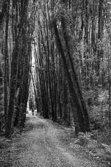 Cycleway (explore) (Nicks.Place) Tags: newzealand people bike canon landscape outdoors photography eos cycling photo blackwhite bush southisland westcoast greymouth kumara westcoastnz nicksplace 5dmarklll ef2470mmf28liiusm westcoastwildernesstrail