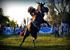 La avioneta (Eduardo Amorim) Tags: horses horse southamerica argentina criollo caballo cheval caballos cavalos corrientes pferde herd cavalli cavallo cavalo gauchos pferd chevaux gaucho  amricadosul gacho amriquedusud  gachos  sudamrica suramrica amricadelsur sdamerika crioulo caballoscriollos criollos jineteada  tropillas americadelsud gineteada tropilhas tropilla crioulos cavalocrioulo americameridionale tropilha caballocriollo eduardoamorim cavaloscrioulos curuzcuati provinciadecorrientes corrientesprovince cavall
