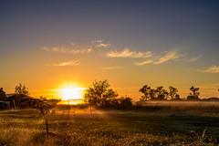 Columpio (Carlos E Corts Parra) Tags: autumn sun grass fog sunrise landscape paisaje swing amanecer pasto columpio nikonflickraward