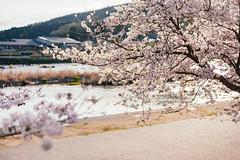 Takebe-cho (Nazra Zahri) Tags: japan river spring nikon raw cherryblossoms hanami okayama 2016 d700 vscofilm
