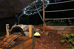 IMG_7774 (jalexartis) Tags: lighting nightphotography sun night dark outdoors aquarium outdoor aquatic basking aquatichabitat ybst yellowbelliedsliderturtles outdoorhabitat