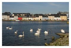 GALWAY (Sonia_Ggonzalez) Tags: galway mar agua nikon paisaje irland cielo casas tejados irlanda cisnes d7000