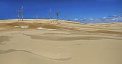 Sand Patterns (Tom Gill.) Tags: statepark sand michigan dunes silverlake sanddune