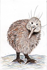 kiwi postcard (CaZaTo Ma) Tags: bird ama kiwi coloredpencils handdrawn watercolorpencils swapbot hmpc
