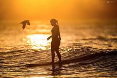 MORNING SURF (Joel Coleman Photography) Tags: morning sunrise dawn surf surfer