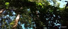 Plantas eltricas (@profjoao) Tags: planta poste plantas natureza paisagem eletricidade fio paisagemurbana jaguar fioeletrico fiao jaguare fiacao joaocesar aulanossa profjoaonetbr wwwprofjoaonetbr aulanossacom aulanossanet aulanossanetbr verprobr
