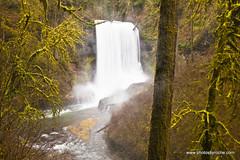 In Silver Falls State Park (doveoggi) Tags: longexposure trees mist oregon forest waterfall moss hike pacificnorthwest silverfallsstatepark 3838