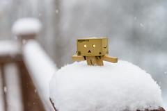 Day 36/366 February 5, 2016 (Wells Photos) Tags: snow deep yotsuba danbo project366 danboard cardbo