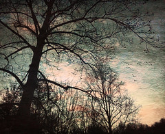 Cotton Candy Sunrise (jeanne.marie.) Tags: pink winter texture silhouette sunrise colorful aqua turquoise treescape tulippoplar colorplay iphoneography iphone5s image5100 100xthe2016edition 100x2016