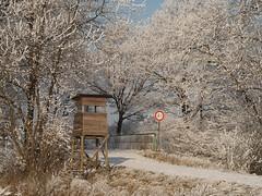 Schwalmstadt_Frost_22_01_2016_40 (Oliver Deisenroth) Tags: schnee trees winter snow ice frozen frost seasonal wintertime eis bäume gefroren