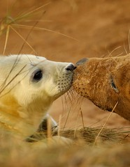 3B4A2132 (Janet-Hedger) Tags: seals donnanook janethedger