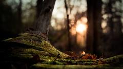 Macro world (houman_thebrave) Tags: park sunset macro tree canon memorial texas houston