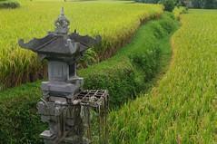 Rice field shrine