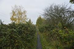 Rabbit Ings (98) (rs1979) Tags: yorkshire barnsley royston southyorkshire rabbitings sandybridgedike