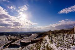 snowy hills (Che Camera) Tags: schnee winter snow nature backlight landscape vineyard wine natur makro landschaft kaiserstuhl weinberg gegenlicht bischoffingen vogtsburg sonyalpha7 ef1740f40 teamsony ilce7