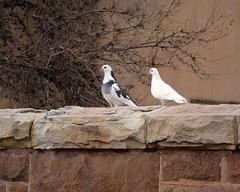 Grace & Beauty (suenosdeuomi) Tags: beauty birds grace doves canons90