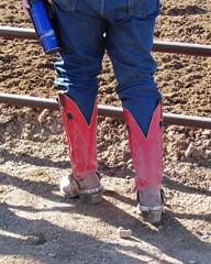 WINTER RANGE 2016 (AZ CHAPS) Tags: arizona spurs cowboy boots wrangs
