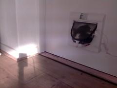 20160210-133636-i-1 (Catflap central) Tags: camera dog pet cats woof cat pi raspberry meow doggie catdoor catflap kattenluik katzenklappe catflapj2nnl taggingasdoguntilautotagginghasanoptout robotaggingisthedevil