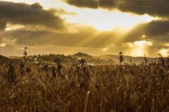 Through The Clouds / Explored Thank you all! (Fredrik Lindedal) Tags: sun sunlight church reed clouds wonderful nikon sweden earth sverige elevated sunrays sunbeam ljungskile visitsweden fredriklindedal