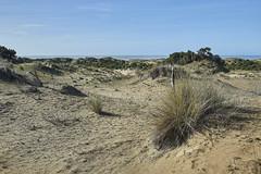 Dunas de Doana 8 (CarlosJ.R) Tags: playa arena dunas doana mareabaja