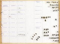 Coll. Owe Nodmar, Scarabaeoidea 4 (Biological museum, Lund University: Entomology) Tags: cetoniinae aphodius scarabaeinae