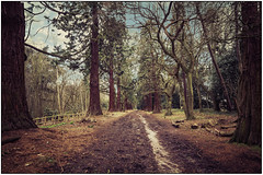 The trees are calling me (hxsaint08) Tags: park trees horses mystery canon grey skies angle path country sigma redwood lightroom 650d havering lenswide