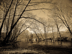 Peaceful -2- (CTfoto2013) Tags: park trees light plant tree nature water monochrome sepia forest vintage woodland reflections river landscape lumix rocks eau mood outdoor connecticut riviere peaceful atmosphere pebbles calm retro panasonic arbres lumiere serene brook reflets calme courant audubon ambiance galets sousbois serein rives paisible coursdeau southbury newegland pomperaugriver southbritain