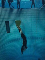 Free Diving with Apnea Caf (oisingormally) Tags: paris pool wideangle freediving underwaterphotography freedivers freediver 20m canons100 freedivingphotography inons2000 underwaterwideangle freediveclubparis divecentreparis 20mdept aquahautsdeseine freedivingpool apneacafe parisfreedivingclub