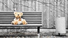 left behind (micagoto) Tags: bench teddy bank teddybär