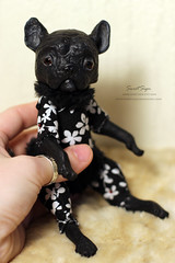 Frenchie (Sweet_Sign) Tags: dog pet black color cute art love nature beautiful beauty animal puppy wonder design amazing cool nice artwork warm doll acrylic handmade spirit miracle ooak interior being critter adorable craft totem clay kawaii frenchie frenchbulldog beast blythe alive collectible artdoll lovely creature glasseyes deviantart bizarre lovenature arttoy varnish handmadedoll posable airdry poseable ooakdoll artobject acrylicpaints dulldog animaltotem airdryclay sweetsign kawaiidoll poseabledoll posabledoll interiordoll dollforblythe