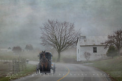 Amish country morning (betty wiley) Tags: road horse usa rain fog country amish lancaster buggy flypapertexture bettywileyphotography