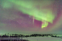 Aurora in Clouds #2 (Amazing Sky Photography) Tags: trees clouds curtain manitoba aurora lyra vega northernlights borealis deneb cygnus northerncross churchillnorthernstudiescentre