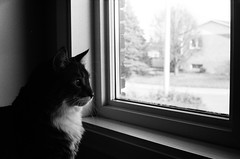 Kupo (dewk707) Tags: pet film window animal cat 400 electro plus hp5 gsn 35 ilford yashica