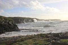 IMG_8339 (DaveGifford) Tags: ireland spanishpoint wildatlanticway