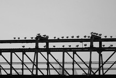 Time to Roost (flosspot) Tags: blackandwhite bw abstract bird lines birds silhouette triangles triangle sony flock shapes repetition roost lynettecoates