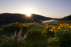 GORGEous morning (gwendolyn.allsop) Tags: morning flowers oregon sunrise landscape spring nikon columbiariver gorge pnw d5200