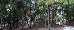 """Tikal: les trois Jeux de Pelotes (devant la Place des Sept Temples) <a style=""""margin-left:10px; font-size:0.8em;"""" href=""""http://www.flickr.com/photos/127723101@N04/25965172620/"""" target=""""_blank"""">@flickr</a>"""