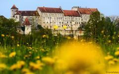 Aus der Froschperpektive (novofotoo) Tags: bayern deutschland sommer natur wiese blumen burghausen lwenzahn gewhnlicherlwenzahn taraxacumsectruderalia