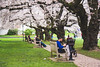 IMG_9518 (elenafrancesz) Tags: uw cherry blossoms wordless