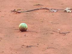 Solitude (CORMA) Tags: brussels belgium belgique bruxelles tennisball tenniscourt 2016 courtdetennis balledetennis