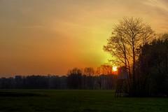 First Sun Rays (Erich Hochstöger) Tags: morning trees sky sun nature sunrise landscape lumix austria österreich outdoor natur meadow wiese himmel panasonic landschaft sonne bäume sonnenaufgang morgen niederösterreich hdr morgenrot loweraustria morgenstimmung morningmood fz150 huntingstand jagtstand
