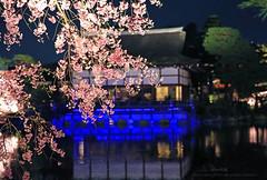 Music night () Tags: japan canon kyoto   sakura     5d3